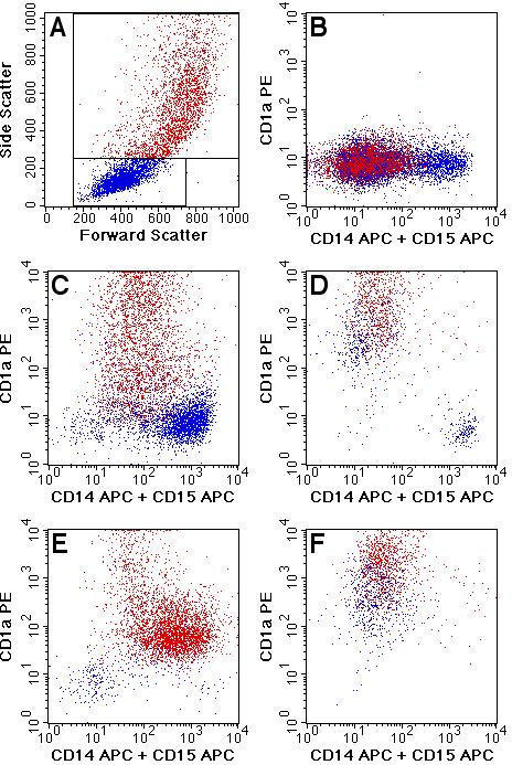 Flow cytometric analysis of myelocyte and DC content in individual colonies.  Results of five colonies differing in their lineage composition are shown.  Low side scatter cells are shown in blue and high side scatter cells are shown in red as indicated in A.  A colony with myeloid cells but no CD1a+ DCs is shown in B.  C-E show colonies with varying frequencies of CD1a+ and CD14/CD15+ cells.  F is an example of a colony primarily composed of CD1a+ DCs. All colonies shown were derived from CD38- progenitors.