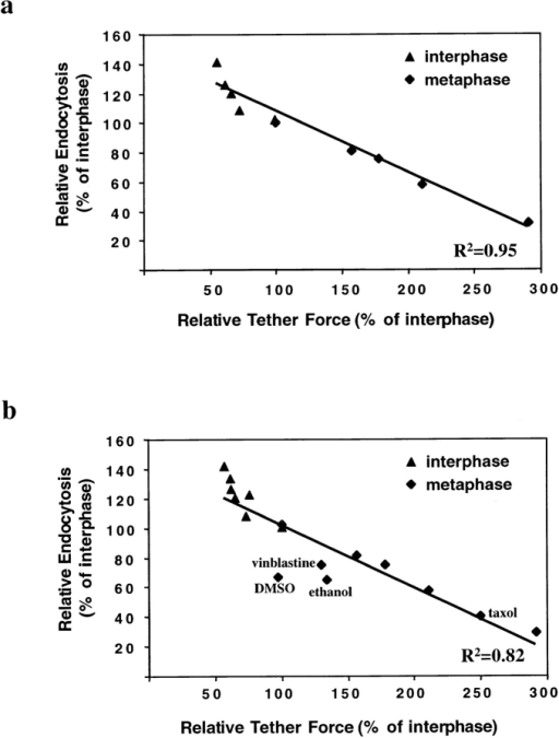 Relative tether force and relative endocytosis rate in  interphase and metaphase cells for: (a) different concentrations  of deoxycholate; (b) different concentrations of deoxycholate,  DMSO, ethanol, and cells arrested with taxol or vinblastine.  Tether force and endocytosis rate are expressed as a percentage  of the value of interphase cells. Line represents linear least  square fit of the data points.