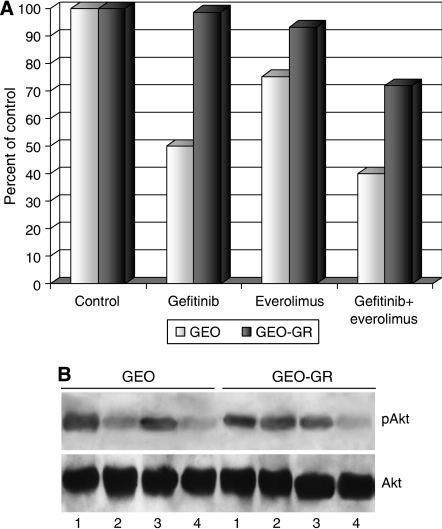 (A) GEO and GEO-GR cells were treated with everolimus (0.1 μM) or gefitinib (5 μM) alone or in combination. The results are statistically significant for everolimus plus gefitinib vs control, vs everolimus alone and vs gefitinib alone (two-sided P<0.0001). For GEO cells, the results are statistically significant for both gefitinib and everolimus vs control (two-sided P<0.0001), whereas for GEO-GR cells only for everolimus vs control (two-sided P<0.0001). (B) Western blotting on total cell lysates from GEO and GEO-GR cells treated with 1 μM gefitinib and/or 0.1 μM everolimus. Lane 1: untreated control; lane 2: gefitinib; lane 3: everolimus; lane 4: gefitinib plus everolimus.