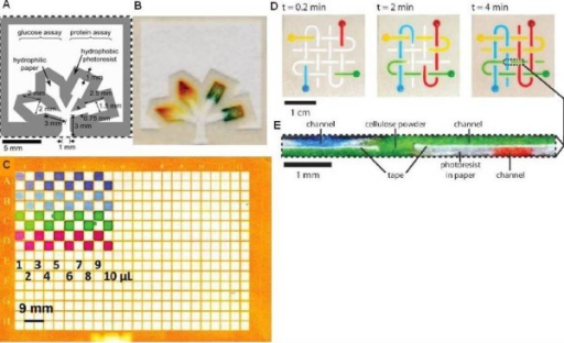 Microfluidics paper based platform. (A) Schematics of a microfluidic paper-based analytical device which can detect glucose and protein in urine simultaneously [71]. (B) Urine sample in a paper-based microfluidic device fabricated by photolithography [71]. (C) Image of a 384-zone paper plate produced with photolithography after applying a range of volumes (1-10 μL) of solutions of different dyes [60]. It shows the fluid isolation abilities of the zones although two zones in the fifth and sixth rows show small breaches in the hydrophobic walls. (D) A 3D microfluidic paper-based analytical device with four channels located at different plates without mixing their contents [56]. (E) Cross-section view of the device in (D) [56].