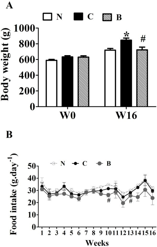 Effects of berberine (BBR) on body weight and food intake of rats. Male SD rats at 6 weeks of age received a high-fat diet (HFD) or regular rodent chow. After 8 weeks of feeding, rats were treated for 16 weeks with BBR or vehicle (n = 8 per group). A: The body weight is the average weight of 8 rats at the beginning of BBR treatment and after 16-week experiment. N, Normal control; C, vehicle –treated rats fed with HFD; B, rats with berberine treatment (200 mg/kg/d). B: Effects of BBR on food intake. The food intake was measured every week. Values are mean ± SEM. *p < 0.05vs N; #p < 0.05 vs C.