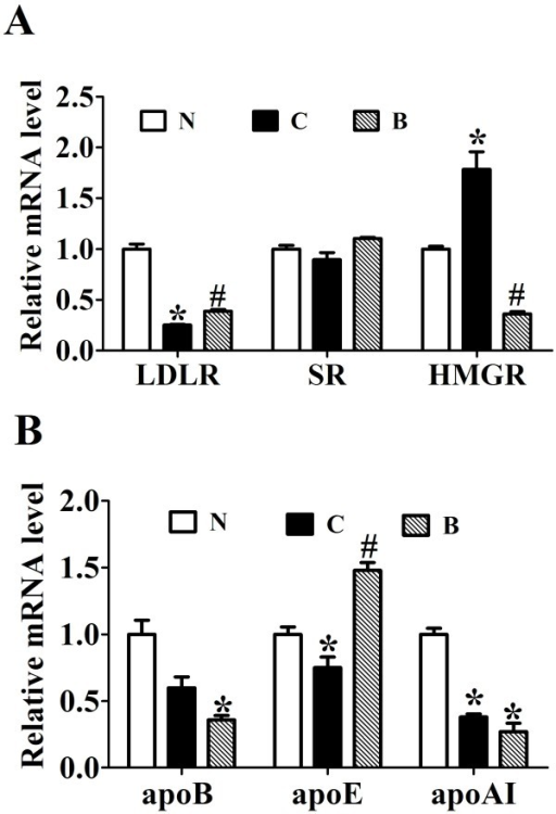 The effects of berberine on 3-hydroxy-3-methyl-glutaryl-CoA reductase (HMGR), Lipoprotein receptors and apolipoproteins gene expression. Real-time quantitative PCR analysis of LDLR, HMGR and SR (A) and apolipoproteins (B) in the livers of SD rats administrated with berberine or vehicle (n = 8 per group). Relative mRNA amounts of each gene were normalized to that of beta-actin. Values are mean ± SEM. *p < 0.05vs N; #p < 0.05 vs C.