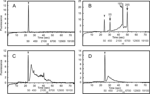 LabChip® 90 electropherograms of DEPC-treated water (a), total RNA extracted from roots of Brasscia seedlings (b), messenger RNA (mRNA) extracted from total RNA (c), and mRNA extracted from total RNA by SPGE (d). Peaks represent the lead marker (50 nt, arrow head) or ribosomal RNAs