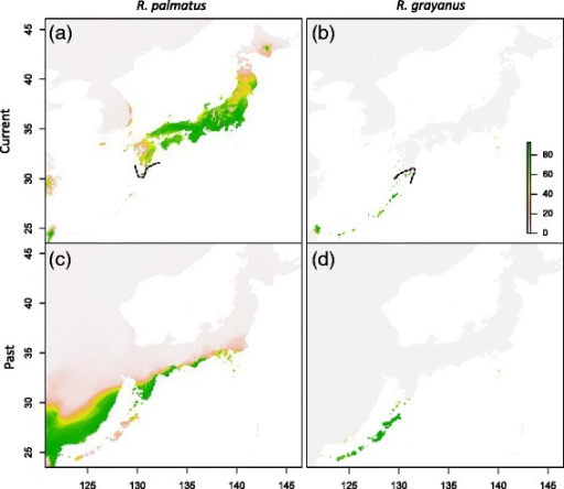 An ensemble forecasting of current and past distribution ofR. palmatusandR. grayanusbased on the bioclimatic variables. Sets of uncorrelated bioclimatic variables were used for each species. Probability of occurrence maps (a, b) and projected distribution of the suitable climates in the past (approx. 20,000 years ago; c, d) in R. palmatus(a, c) and R. grayanus(b, d). Dashed lines indicate the known current southern and northern limits of R. palmatus(a) and R. grayanus(b), respectively.