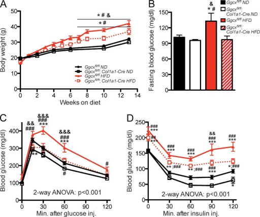 Ggcxfl/fl;Col1a1-Cre mice are protected from diet-induced obesity and glucose intolerance. (A) Body weight curves. (B) Blood glucose levels after 16-h fasting. (C) GTTs. Mice were fasted for 16 h and injected i.p. with 1.3 g/kg glucose. (D) ITTs. Mice were fasted for 4 h and injected i.p. with 0.7 U/kg insulin. (B–D) Metabolic analyses were performed in mice fed an ND or HFD for 8 wk. Ggcxfl/fl ND (n = 14), Ggcxfl/fl;Col1a1-Cre ND (n = 14), Ggcxfl/fl HFD (n = 8), Ggcxfl/fl;Col1a1-Cre HFD (n = 11). Results are given as means ± SEM. *, P < 0.05; **, P < 0.01; ***, P < 0.001 when comparing with Ggcxfl/fl ND group; #, P < 0.05; ##, P < 0.01; ###, P < 0.001 when comparing with Ggcxfl/fl;Col1a1-Cre ND group; &, P < 0.05; &&, P < 0.01; &&&, P < 0.001 when comparing with Ggcxfl/fl;Col1a1-Cre HFD group.