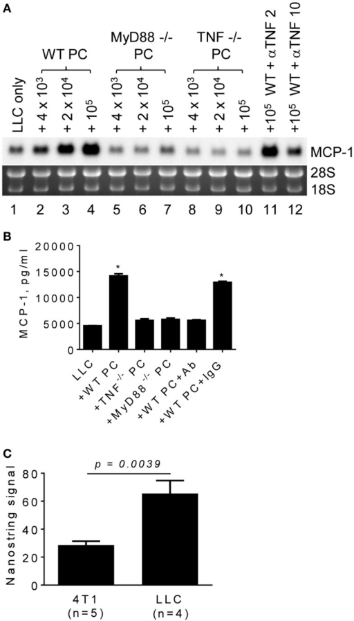 The role of macrophage MyD88 and TNFα in MCP-1 mRNA expression by LLC cells. (A) One thousand LLC cells were seeded into 12-well plates. After overnight incubation at 37°C, three different numbers of PC from WT, MyD88−/− or TNF−/− mice were added to the wells. To neutralize TNFα, 2 or 10 μg of anti-mouse TNFα IgG (R&D Systems) was added with 1 × 105 PC from WT mouse. After incubation at 37°C for 5 days, total RNA was isolated and the expression of MCP-1 mRNA was examined by Northern blotting (10 μg per lane). (B) The experiment presented in A was repeated with 1 × 105 PC from WT, MyD88−/− or TNF−/− mice and the MCP-1 concentration in the culture supernatants was measured by ELISA. The results are shown as the mean ± SEM. *p < 0.0001, n = 4. (C) The expression of TNF mRNA in 4T1 tumors or LLC tumors was examined by Nanostring gene profiling. The results are shown as the mean ± SEM.