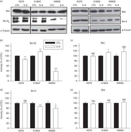 Interleukin (IL)-6 downregulates the Bcl-2 family member, Bcl-XL in WM35 melanoma cells. Melanoma cells A375, 518A2, and WM35 were kept under serum-free conditions in the absence [control (CTL)] and presence of 20 ng/ml IL-6 for 48 h. (a) Bcl-2 family members, Bcl-XL, Bax, Bcl-2, and Bak were visualized using α-tubulin as a loading control. (b–e) Three independent experiments were analyzed for intensity and presented as mean±SEM (n=3). Statistical significance versus control: *P<0.05; **P<0.01; ***P<0.001; NS, not significant.