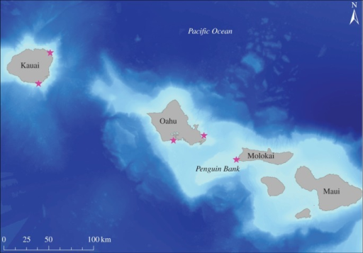 Capture locations of Hawaiian Monk Seals in the main Hawaiian Islands. Three seals were instrumented on Oahu, nine on Molokai and four on Kauai.