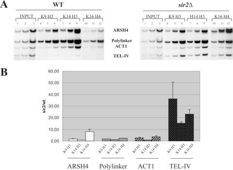 (A) The histone deacetylase activity of Sir2p alters acetylation of the H4-K16 residue in the plasmid ARS. WT and sir2Δ cells transformed with p415GAL were subjected to the standard treatment for ChIP. Coamplification products of four different DNA regions were reported: ARSH4 refers to a region encompassing the ARSH4 and adjacent plasmid DNA of p415GAL; Link refers to a region encompassing the polylinker of p415GAL; ACT1 refers to the actin gene in its chromosomal location and Tel IV refers to a subtelomeric (telomer IV, L-arm). INPUT (1–3): coamplification of three doubled amounts of samples from whole cell extract (without immunoprecipitation). Samples IP, lanes 4–6: whole cell extract immunoprecipited with anti K9-H3 antibodies and coamplified in three doubled amounts; lanes 7–9 samples as in 4–6 immunoprecipited with anti H3-K14; lanes 10–12, samples as in 4–6 immunoprecipited with anti H4-K16; WT and sir2Δ indicate samples treated for ChIP analysis from WT and sir2Δ cells. (B) Shows a graphic representation comparing the ratio of the sir2Δ/WT ratio normalized to relative INPUTS for ARSH4, Polylinker, ACT1 and TEL-IV.