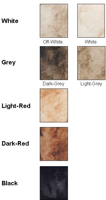 Coat colour categories used for visual scoring of the second-generation individuals of the F2-Backcross population studied. The primary analysis was based on the five category colour scoring (White, Grey, Light-Red, Dark-Red and Black). The initial visual scoring had considered seven subcategories (White, Off-White, Light-Grey, Dark-Grey, Light-Red, Dark-Red and Black).