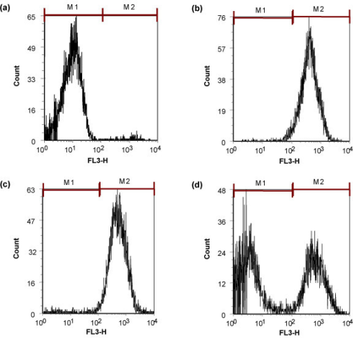 Antimicrobial activity of MUC7 12-mer against C. albicans in the presence of potassium, monitored by flow cytometry. Fluorescence distribution of the control (untreated) C. albicans cells (a); cells incubated for 90 min at 37°C with 25 μM MUC7 12-mer (b-d), in the absence of KCl (b), in the presence of 40 mM KCl (c), in the presence of 80 mM KCl (d). The cells were stained with propidium iodide (3 μg/mL). Susceptibility to MUC7 12-mer is shown as percentage of C. albicans with increasing fluorescence; 10,000 events were analyzed.