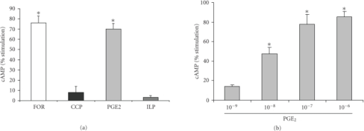 PGE2 stimulates cAMP in IMCD-K2 cells.Serum-starved cells were stimulated for tenminutes with (a) 10−6 M of different prostanoids (cicaprost (CCP), iloprost (ILP), and PGE2)or 10−5 M forskolin (FOR), and with (b) differing concentrations of PGE2 (10−9 to 10−6 M). A competitive binding assay with 3H-cAMP wasperformed and the percent cAMP stimulation was determined using a scintillationcounter. Values are means  ±   S.E.M.; n = 3–4. *P < .05 compared to control.
