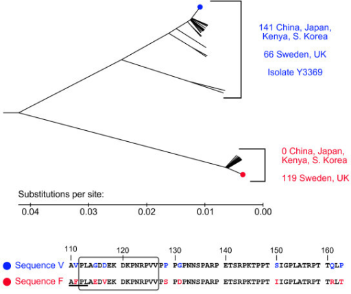 Phylogenetic analysis reveals two groups of variations within HSV-1 glycoprotein G by region. The evolutionary history was inferred using the UPGMA method. The tree is drawn to scale, with evolutionary distances in the units of base substitutions per site. There were a total of 165 positions, coding for AA 110 to 164. Phylogenetic analyses were conducted in MEGA4 [15]. Labeled branches represent the number of isolates from the specified region. Sequences shown at the bottom are from the branches highlighted with colored dots, which represent the most common sequence. Positions where sequences V and F differ are in color. The immunodominant region of glycoprotein G is enclosed by a box. The epitope AFPL (underlined, present exclusively in sequence F) is recognized by a common anti-glycoprotein G-1 mAb. The clinical isolate Y3369 discussed herein contains sequence V.