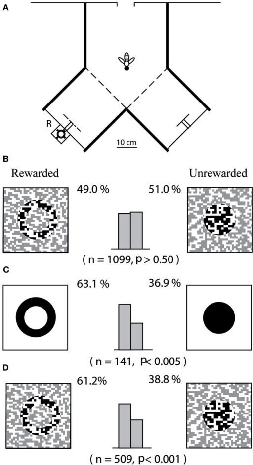 "Investigation of ""top-down"" processing in honeybees. Adapted from Zhang and Srinivasan (1994). (A) Experimental setup; (B) bees are trained and tested directly on camouflaged patterns; (C) bees are first trained on simple patterns; and (D) tested on camouflaged patterns."