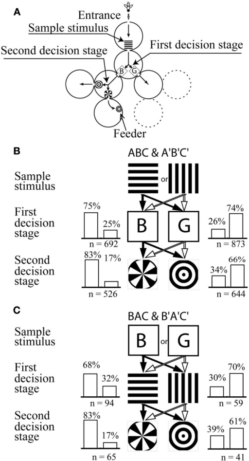 Learning a symbolic-delayed-matching-to-sample task in the visual modality. (A)Y-maze setup with two decision stages. (B) Training stimulus configuration and training performance. The bees learned to choose horizontal-blue-sector or vertical-green-ring associations in order to get a reward. (C) Stimulus configuration and performance on the transfer test. Modified from Zhang et al. (1999). Details in text.