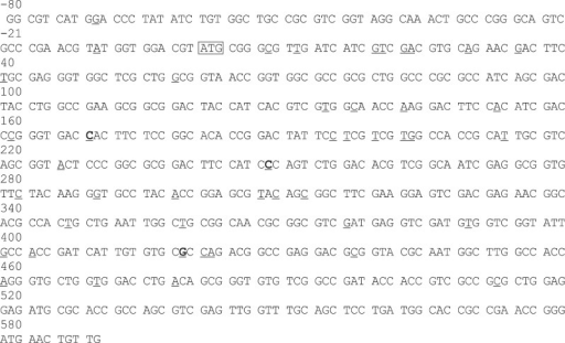 Genomic DNA sequences of pncA encoding pyrazinamidase in Mycobacterium tuberculosis. The mutation spots in pncA in pyrazinamide (PZA)-resistant isolates previously reported in the reference 6-8,11 among South Koreans were underlined. Three mutations from extrapulmonary tuberculosis detected in this study were marked in bold. Nucleotides were numbered from start codon  of pncA. This figure is modified from those of the reference7,11.