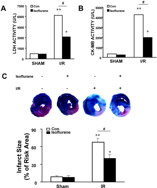 The influence of anesthetic-induced preconditioning with 1.0 MAC of isoflurane on leakage of LDH and CK-MB, and infarct area in rat hearts.A, B. Serum LDH and CK-MB concentrations were analyzed. The increase in LDH and CK-MB concentrations was lower in rats pretreated with isoflurane than in I/R group. C. Isoflurane preconditioning significantly decreased infarct area compared with I/R group animals. Representative cross-sectional slices derived from a single heart with and without isoflurane. The infarct size normalized to the area at risk. Values are means ± S.E.M., n = 5 in each group. *P<0.05, **P<0.01 vs. sham group, and #P<0.05 vs. the I/R control group.
