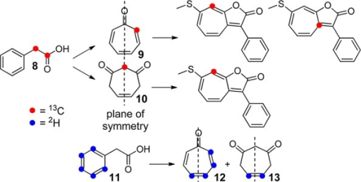 ExpectedPatterns of Isotope Incorporation into Roseobacticide Bfrom 1,2-13C- and 11