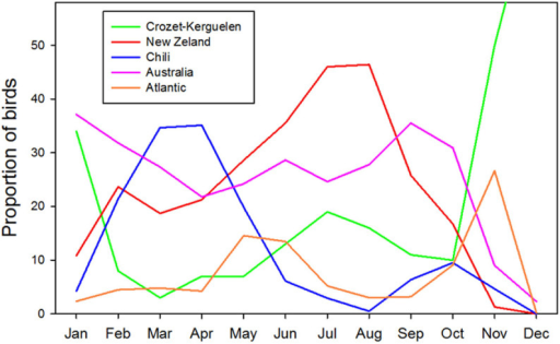 Proportion of migratory birds from Crozet and Kerguelen in the different oceanic sectors of the Southern Ocean over the annual cycle of the sabbatical year (Figure produced from Statistica).