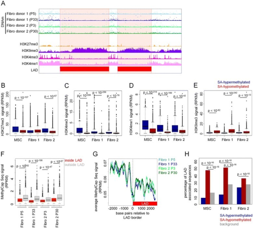 Senescence-associated hypomethylation is enriched in lamina-associated domains. DNAm profiles of fibroblasts at early and late passage (MethylCap-seq) were compared to previously published data on H3K27me3 [30], H3K4me3 [30], H3K4me1 [30], H3K9me3 [30], and lamina-associated domains (LADs) [29] in fibroblasts. Non-methylated DNA was particularly associated with the histone mark H3K9me3 and LADs, whereas H3K27me3, H3K4me3, and H3K4me1 were significantly reduced in these regions. RPKM signals are exemplarily depicted for a region in chromosome 16 (A). Distributions of average RPKM levels of H3K27me3 (B), H3K4me3 (C), H3K4me1 (D), and H3K9me3 (E) in 1,000-bp windows around DMRs are shown. Average signal intensity of DNAm was significantly lower inside LADs than outside LADs (Mann-Whitney test of equal means) (F). A particular sharp decline of DNAm level was observed at the border of LADs (in all samples) (G). Senescence-associated DMRs were then correlated with LADs. The proportion of senescence-associated (SA) hypermethylation was significantly decreased in LADs while SA-hypomethylation was highly significantly increased in LADs as compared to randomly selected regions (two-tailed Fisher's Exact test) (H).