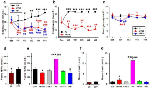 Chronic effects of taVNS in rats.Comparing blood glucose concentrations in naïve and taVNS treated ZDF rats (a, n = 6 each), in pinealectomized ZDF rats (immediately after pinealectomy operation) with or without taVNS treatment (b, n = 5 each), and in naïve, taVNS, and AMEA treated ZL rats (c, n = 4 each). ZL, ZDF, naïve ZL or ZDF rats; taVNS, taVNS treated rats; AMEA, auricular margin electroacupuncture treated rats; Px, pinealectomized rats; Px/VS, taVNS treated pinealectomized rats; Mel, daily melatonin injected rats. Bas, baseline (before taVNS); W1–W5, 1–5 weeks after consecutive taVNS treatment. *, **, *** P<0.05, 0.01, 0.001 vs. Bas of the same group; #,##,### P<0.05, 0.01, 0.001 vs. naïve at the same time point, respectively. Concentrations of plasma HbA1c (d, e) and insulin (f, g) upon sampling were compared in naïve ZDF and ZL rats (d, f) and in ZDF rats subjected to different treatments (e, g). *, *** P<0.05, 0.001 vs. ZDF, respectively; ### P<0.001 vs. remaining groups. Sample size estimated based on power level of 0.8.