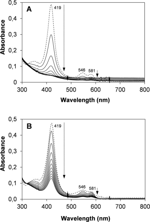 Bleaching of native VP (A) and the T45A/I103T/M152F/M262F/M265L variant (B) under high oxidative stress conditions.Both enzymes were incubated with 5000 equivalents of H2O2 at 25°C, and spectra (in the 300–800 nm range) were recorded every 2 min for 20 min. The first spectrum, obtained after 5 s of incubation, is shown as a discontinuous line and corresponds to: A, native VP CIII; and B, a mixture of CII and CIII (the latter being the major form) of the T45A/I103T/M152F/M262F/M265L variant. The arrows indicate the direction of the spectral evolution with time.