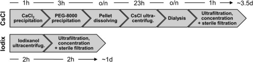 Process steps and duration of CsCl- and iodixanol-based adeno-associated virus (AAV) purification. After cell lysis by three repeated freeze–thaw cycles, the AAV-containing lysate is purified by either a CsCl- or iodixanol-based purification process. CsCl: Nucleic acids and proteins are pelleted by CaCl2 and PEG-8000 precipitation, respectively. After protein pellet dissolving overnight (o/n) and subsequent CsCl density gradient ultracentrifugation, CsCl is removed from the target fractions by repeated dialysis cycles. The AAV suspension is finally concentrated by ultrafiltration and sterile filtered. Iodixanol: The cell lysate is applied to iodixanol density gradient ultracentrifugation. Iodixanol is removed by three repeated ultrafiltration/concentration steps and the AAV suspension is finally sterile filtered.