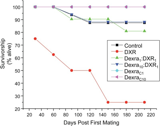 Dexra pretreatment prevents DXR-induced decrease in mice survivorship through 8 months of life.Plot represents the percentage of animals that survived as a function of days post-treatment through 8 months of age. At experiment initiation across all trials: n = 16 Ctl (vehicle control), 16 DXR, 21 Dexra1:DXR1 (1:1 mg ratio), 16 Dexra10:DXR1 (10:1 mg ratio), 12 DexraC1, and 12 DexraC10 mice, where n represents the total number of animals that received DXR treatment. Survival by 8 months was: n = 14 Ctl (vehicle control), 4 DXR, 17 Dexra1:DXR1 (1:1 mg ratio), 15 Dexra10:DXR1 (10:1 mg ratio), 12 DexraC1, and 11 DexraC10. The control and DXR-only treatment groups adapted from [27].