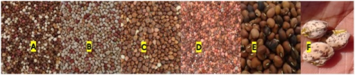 Different M3 seed colors (A–F) observed among all mutants at all locations.