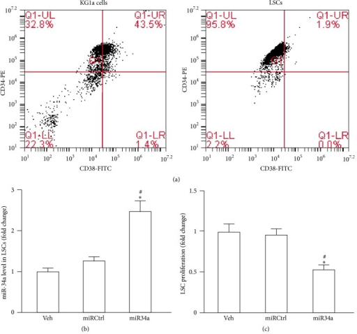 LSC characterization and the effect of miR34a overexpression on LSC proliferation. (a) Representative flow cytometric plots of CD34-PE versus CD38-FITC. Expressions of CD34 and CD38 in KG1a cells before sorting (left) and after sorting (right). (b) LSCs were subjected to vehicle (veh) treatment and transfected with miRCtrl or miR34a mimic as indicated and 2 days later the miR34a level was measured by qRT-PCR. (c) LSCs were subjected to treatment with veh or miRCtrl transfection or miR34a mimic transfection. After 2 days, the LSC proliferation was determined by MTT assay. Data represents mean ± SEM. ∗P < 0.05 versus veh; #P < 0.05 versus miRCtrl.