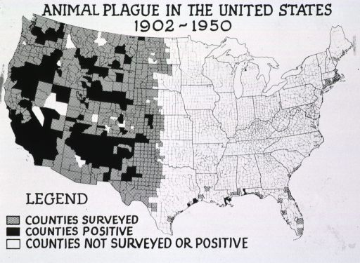 <p>Geographic representation of the counties surveyed, counties positive, and counties not surveyed or positive for animal plague in the United States between 1902-1950.</p>