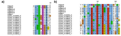 Alignment of Human CatSper voltage sensor and pore forming regions with selected L- and T-type calcium channels. (a) Voltage sensor region of CatSper human protein sequences aligned with repeats 1–4 of selected human L- and T-type calcium channels; CCAA_Human – calcium channel alpha1A (SWISSPROT O00555), CCAS_Human – calcium channel 1S (SWISSPROT Q13698) and CCAH_Human – calcium channel 1H (SWISSPROT O95180). (b) Pore selectivity region of CatSper ion channel family aligned with selected human L- and T-type calcium channels ion transport repeats.