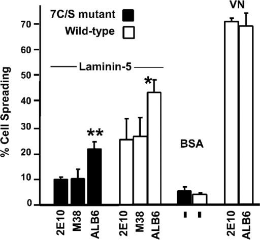 Anti-CD9 antibody stimulates cell spreading. MDA-MB-435 cells spread on the indicated substrates for 45 min, in the presence of mAb ALB6 (anti-CD9) or control antibodies (2E10, anti–integrin α2; and M38, anti-CD81). Spreading was assessed as described in the Fig. 5 legend (**, P < 0.02 vs. controls; *, P < 0.06 vs. controls). Error bars indicate SEM, and dashes indicate that no antibody was added.