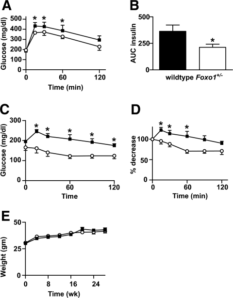 Metabolic characterization of HFD-fed Foxo1+/− mice. Metabolic features of 10-month-old male mice after 24 weeks of a HFD (wild type n = 10; Foxo1+/− n = 14). A and B: Whole-blood glucose and plasma insulin during intraperitoneal glucose tolerance testing. C and D: Insulin tolerance testing. Animals were fasted for 6 and 4 h before GTTs and ITTs, respectively. Results are represented as both absolute glucose values and percent glucose decrease from basal. Values represent mean glucose ± SE. *P < 0.05 for Foxo1+/− versus wild-type. E: Mice were weighed at the initiation of the HFD and then at 4-week intervals up to 28 weeks of HFD duration. Values represent mean body weight of at least 15 mice per genotype ± SE. ■, wild type; ○, Foxo1+/−.