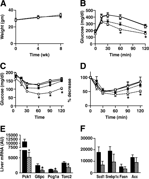 Effect of TZD treatment on in vivo glucose homeostasis and insulin sensitivity in Foxo1+/− mice. A: Body weights of male mice were measured at initiation of rosiglitazone treatment and every 4 weeks up to 8 weeks of age (wild-type HFD + TZD n = 8; Foxo1+/− HFD + TZD n = 10). B: Glucose tolerance testing (1 g/kg dextrose i.p.) was performed on mice after 5 weeks of combined HFD and TZD (wild-type HFD + TZD n = 8; Foxo1+/− HFD + TZD n = 10) and compared with GTT results from mice after 5 weeks of the HFD alone (wild-type HFD n = 10; Foxo1+/− HFD n = 14). Values represent mean glucose ± SE. C and D: Insulin tolerance testing (0.35 unit/kg insulin i.p.) was conducted on mice after 5 weeks of combined HFD and TZD (HFD + TZD wild type n = 8; HFD Foxo1+/− + TZD n = 10) and compared with GTT results from mice after 5 weeks of the HFD alone (HFD wild type n = 10; HFD Foxo1+/− n = 14). Results are represented as both absolute glucose values and percent glucose decrease from basal. Glucose curves from both GTT and ITT were significantly different between TZD-treated Foxo1+/− and wild-type mice (P < 0.04) and between TZD-treated Foxo1+/− mice compared with mice fed a HFD alone (P < 0.001). ○, HFD Foxo1+/−; ■, HFD wild type; ○, HFD + TZD Foxo1+/−; ■, HFD + TZD wild type. E and F: Liver gene expression studies conducted in TZD-treated Foxo1+/− mice used a programmed microarray technique to measure genes that influence both hepatic glucose production and fatty acid synthesis. Relative mRNA values are reported as means ± SE. *P < 0.05. AU, arbitrary units. ■, FD + TZD wild type; ▨, HFD + TZD Foxo1+/−.