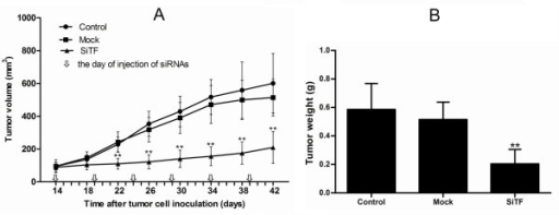Tumor volume curve and bar graph of tumor weight on the 42nd day when mice were killed. (A): The curve showed that the tumor growth of SiTF group from days 22 to the end was significantly inhibited compared to that of control and mock groups. (B): Bar represented that the tumor weight of SiTF group was decreased than that of control and mock group. **P < 0.01 versus mock.