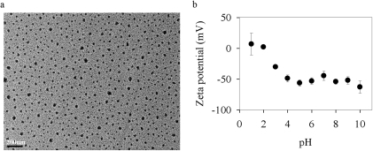 The transmission electron microscope image of TiO2-ENs dispersed in the modified WC medium (WCm) (a) and their zeta potentials (mV) at different pH (b).