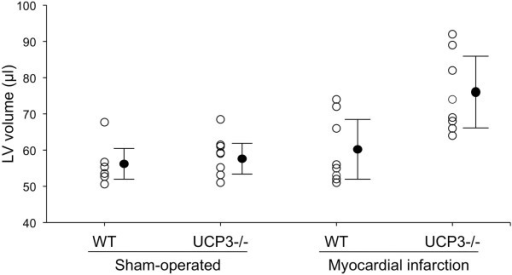 Individual values for LV volume in sham-operated and myocardial infarction WT and UCP3−/− mice. Closed circles indicate mean ± standard deviation.