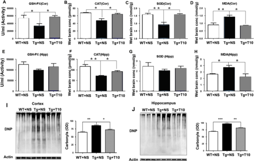 Treatment with triptolide had anti-oxidative effects on the brains of 5XFAD mice. (A,E) ELISA was used to detect the activity of GSH-Px in the cortex (Cor) and hippocampus (Hipp) of saline-treated wild-type mice (WT+NS), saline-treated 5XFAD mice (Tg+NS) and triptolide (T10)-treated 5XFAD mice (Tg+T10). (B,F) CAT levels in the cortex and hippocampus of the three groups of mice were measured by using ELISA. (C,G) SOD contents of the cortex and hippocampus of the three groups of mice. (D,H) The production of MDA in the cortex and hippocampus of the three groups of mice. (I,J) The protein samples of cortex or hippocampus were treated with dinitrophenyl hydrazine and subjected to western blotting. The levels of oxidative proteins were determined by using densitometry to quantify positive bands of 2,4-dinitrophenyl (DNP)-modified proteins. Actin was used as an internal control (n=6 animals per group), *P<0.05, **P<0.01, ***P<0.001 versus Tg+NS, one-way ANOVA with Tukey's post hoc test. Conc, concentration; OD, optical density.