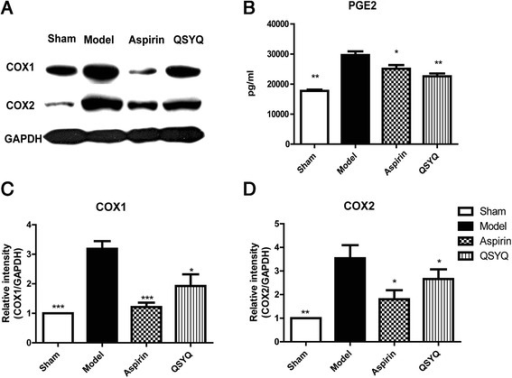QSYQ inhibited expressions of COXs. a Western blot showed that expressions of COX1 and COX2 in cardiac tissues were significantly up-regulated in the model group compared with those in the sham group. In the aspirin and QSYQ-treated groups, expressions of COX1 and COX2 were all down-regulated compared with those in the model group. The inhibitory effect of QSYQ on COXs was milder than that of aspirin. b Expression of cardiac PGE2 in the model heart tissues was up-regulated as compared with that in the sham group and treatments with aspirin and QSYQ down-regulated expression of PGE2 towards basal level. Figure (c) and (d) were the relative quantitative illustrations of expressions of COX1 and COX2 in different groups (*P < 0.05, **P < 0.01, ***P < 0.001, other groups vs. model group, n = 8)