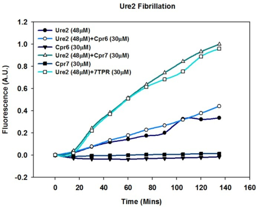 Cpr7 enhances in vitro fibrillization of Ure2.Purified Ure2 (48 μM) was incubated at 37°C with and without Cpr6, Cpr7 or 7TPR (30 μM each) and 500μM ThioflavinT. The ThT fluorescence was monitored at 485nm upon excitation at 450nm. As seen, ThT fluorescence intensity was further enhanced upon incubation of Ure2 with Cpr7 or 7TPR.