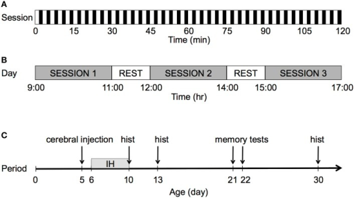 Graphical representation of the IH protocol. (A) Each session lasted 2 h with a frequency of 20 events/h. For each hypoxic event, after 90 s of normoxia, pure N2 was injected into the chamber for 30 s, which decreased FIO2 from 20.9 to 8%. FIO2 was maintained at 8% for 60 s. (B) The pups were exposed to IH during three 2-h sessions per day. During rest periods, the pups were returned to their dam for 1 h. After completion of the third session, all pups were returned to their dam until the following day. (C) The pups were exposed to IH over 5 consecutive days, from P6 to P10; hist: histology.