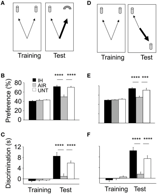 Improvements in memory in mice postnatally exposed to IH. Memory was assessed on P22 using the Object Recognition Task (ORT, A–C) and Object Location Task (OLT, D–F). IH, mice exposed to chronic intermittent hypoxia (n = 20); AIR, mice exposed to air (n = 20); UNT, untreated unmanipulated mice left with their dams (n = 19). ORT, (B,C) In the training phase, the three groups tended to equally explore the two objects. In the ORT test phase, the IH group had significantly higher preference (B) and discrimination (C) indices compared to the AIR group; with both values similar to those in the UNT group. OLT, (E,F) gave similar results. Values are group means ± SEM. ***p < 0.001; ****p < 0.0001.