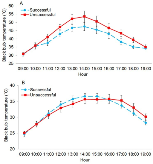 Successful nest sites moderated thermal environments more than unsuccessful nests during extreme heat.(A) Mean black bulb temperature (Tbb) (±SE) measured from 09:00–19:00 at successful (n = 54) (dashed line) and unsuccessful (n = 33) northern bobwhite nests (solid line) on days when maximum ambient temperature (Tair) was ≥ 39°C (n = 12) and (B) < 39°C (n = 75) at the Packsaddle WMA, Oklahoma, USA (2013–2014).