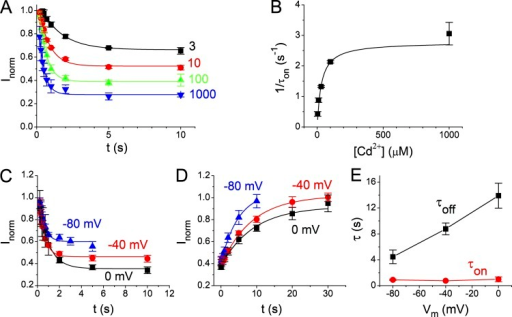 Voltage dependence of the inhibition and recovery kinetics of the Cd2+ modulation of the I225W/V490W mutant of CLC-0. (A) Time course of current inhibition by various [Cd2+] (in micromolars) at −40 mV. (B) Inverse of the time constant of Cd2+ inhibition (kon = 1/τon) as a function of [Cd2+]. The values of τon were obtained from single-exponential fits as in A. (C) Averaged time course for the inhibition by 30 µM Cd2+ at 0, −40, and −80 mV. Data points were calculated by normalizing the current in various [Cd2+] to the control current ([Cd2+] = 0). (D) Time course of the current recovery from Cd2+ inhibition. Data points were obtained by normalizing the current recovered after Cd2+ was washed out to that before the application of Cd2+. (E) Time constants of the inhibition (τon) and recovery (τoff) as a function of membrane voltage. Time constants were obtained by fitting the data points in C and D with single-exponential functions.