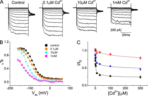 Steady-state inhibition of the I225W/V490W mutant of CLC-0 by intracellular Cd2+. (A) Original recording traces in the absence of Cd2+ (control) and in the presence of various [Cd2+]. (B) Voltage-dependent activation curves of I225W/V490W in 0 (control) and various [Cd2+] based on the experiments similar to those shown in A. The initial tail current was normalized to that obtained after the test pulse of −160 mV in the absence of Cd2+. Notice that the maximal Po of I225W/V490W is reduced at 1 mM of Cd2+. (C) Dose–response curves of the Cd2+ inhibition of I225W/V490W at different voltages (black, −80 mV; blue, −120 mV; red, −160 mV). Data points were fitted to a Langmuir equation with an apparent affinity of 1 µM (−80 mV), 7 µM (−120 mV), and 204 µM (−160 mV), respectively.