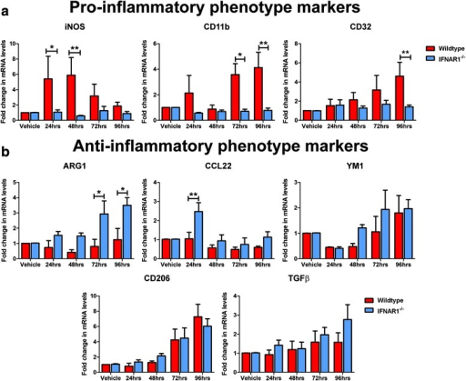 Aβ1-42 induces a pro-inflammatory phenotype in primary cultured glia with removal of IFNAR demonstrating a predmoninatly anti-inflammatory response. a Q-PCR of primary wildtype and IFNAR1−/− glial cultures treated with 10 μM Aβ1-42 for 24–96 h analyzing iNOS, CD11b and CD32 pro-inflammatory glial marker expression levels. b Q-PCR of primary wildtype and IFNAR1−/− glial cultures treated with 10 μM Aβ1-42 for 24–96 h analyzing ARG1, CCL22, YM1, CD206 and TGFβ anti-inflammatory glial marker expression levels. For Q-PCR all samples were normalized back to the Ct value of the housekeeping gene GAPDH (ΔCt). The mRNA of the Aβ1-42 treatment groups was then expressed relative to their gene-specific vehicle controls (fold change, ΔΔCt). Data are displayed as mean ± SEM (n = 4 (wildtype), n = 5 (IFNAR1−/−); *p < 0.05, **p < 0.01). See Additional file 2: Table S1 for further analysis