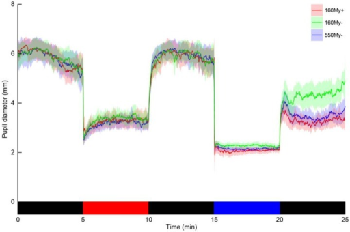 The change in pupil diameter of the left eye throughout the light exposure protocol in three different conditions. The traces represent the population mean pupil diameter, with the semi-transparent areas indicating the 95%-confidence interval, for each of the three conditions (red trace: the condition including 160 µW/cm2 blue light with the use of mydriatics (160My+), green trace: the condition including 160 µW/cm2 blue light with the pupil in its natural state (160My−), blue trace: the condition including 550 µW/cm2 blue light with the pupil in its natural state (550My−)). The bottom bar indicates the light exposure sequence, which was equal for all three condition (black = dark, red = monochromatic red light and blue = monochromatic blue light).
