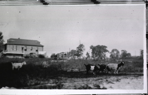 <p>View of buildings across a field.  Goats are in the foreground.</p>