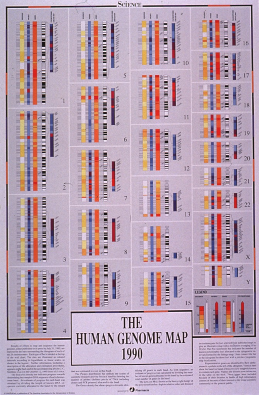 <p>Predominantly white and gray poster with black lettering.  Visual image is a series of 24 boxes--1 for each chromosome--containing multicolored bars depicting the progress in mapping the human genome as of Oct. 1990.  Title, additional text, publisher and sponsor information all below image.  Verso provides additional details about the image.</p>